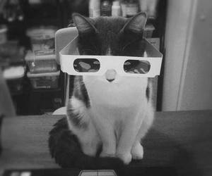 cat, 3d, and animal image