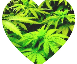 weed and love image