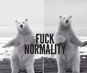bear, normality, and cute image