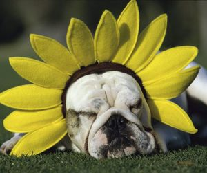 dog, cute, and flower image