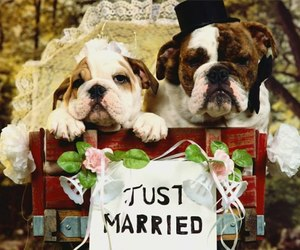 dog and married image