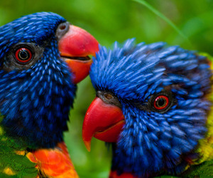 colors and parrot image