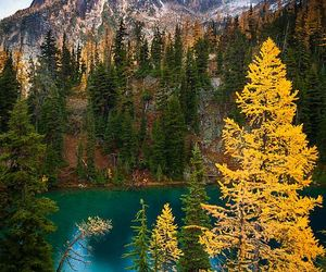 forest, woods, and lakes image