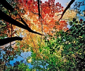 tree, autumn, and colors image