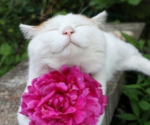 adorable, beautiful, and cat image