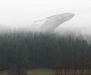 whale and forest image