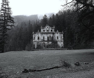 black and white, castle, and forest image