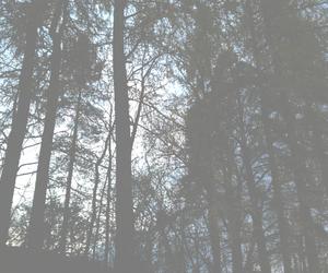 fog, forest, and haze image