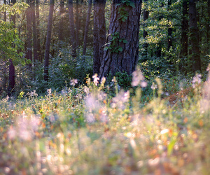 flowers, nature, and forest image