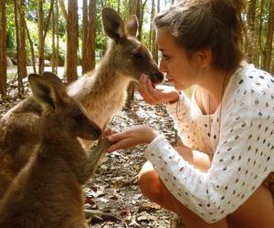 kangoroo, australia, and summer image