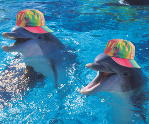 dolphin, lol, and water image