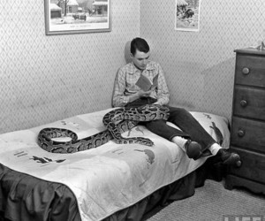 black and white, snake, and book image