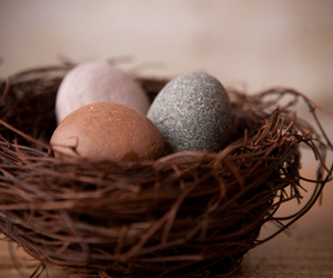 nest, photography, and stones image
