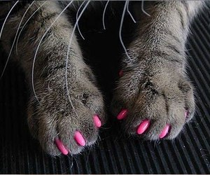 cat, pink, and nails image