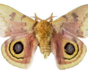 moth and pretty image