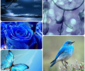blue, rose, and butterfly image