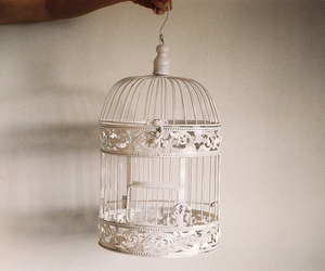 cage, vintage, and birdcage image