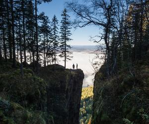 amazing, evergreen, and fog image