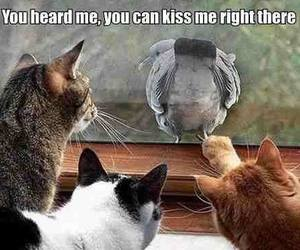 bird, lol, and cats image