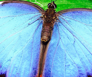 blue, butterfly, and pretty image