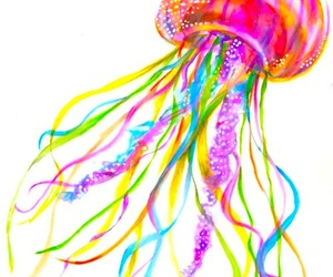 colourful, jellyfish, and sealife image