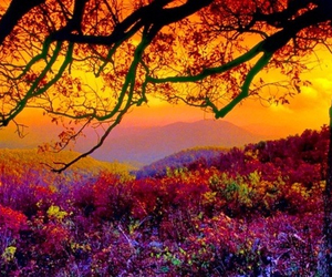 flowers, nature, and sunset image