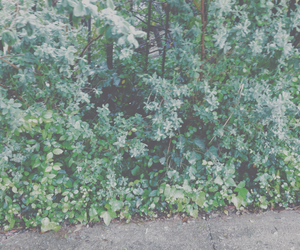 bush, leaves, and pale image