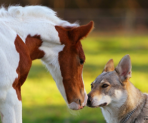 dog, horse, and separate with comma image