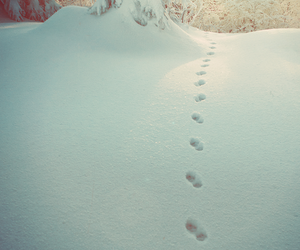 cold, footprints, and snow image