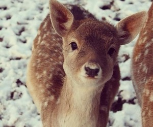 deer, winter, and cute image