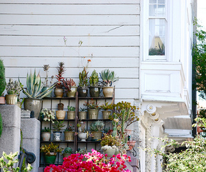 house, plants, and pots image