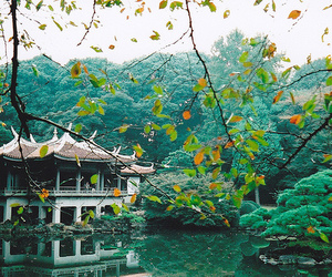 beautiful, green, and photography image