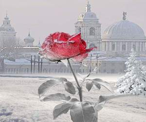 beauty, cold, and frozen image