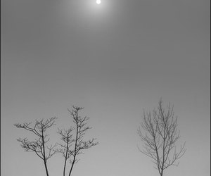 black and white, fog, and photography image