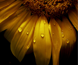 amber, flower, and water drops image