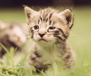 adorable, kitten, and nature image