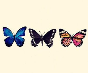 butterfly, drawing, and nature image