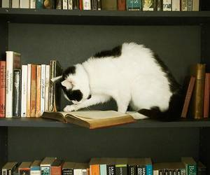 beautiful, book, and cat image