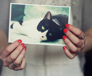 cat, vintage, and nail image