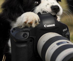 dog, camera, and canon image