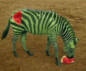 animal, food, and funny image