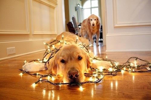 dog, light, and christmas image