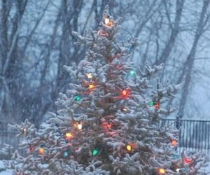 christmas, christmas tree, and snow image