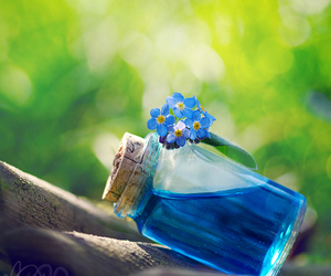 blue, flowers, and photography image
