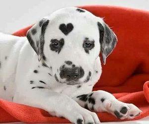 dog, heart, and puppy image