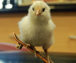 Chick, skate, and skateboard image