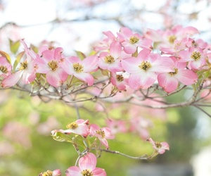 nature, flowers, and pretty image