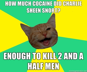 cat, joke, and charlie sheen image