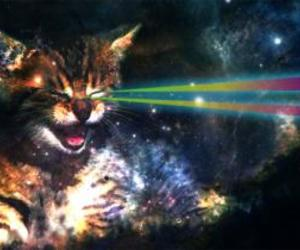 cats and space image