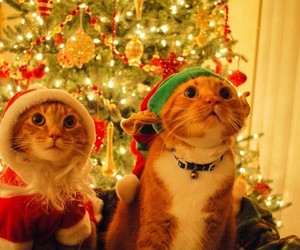 cats, winter, and christmas image